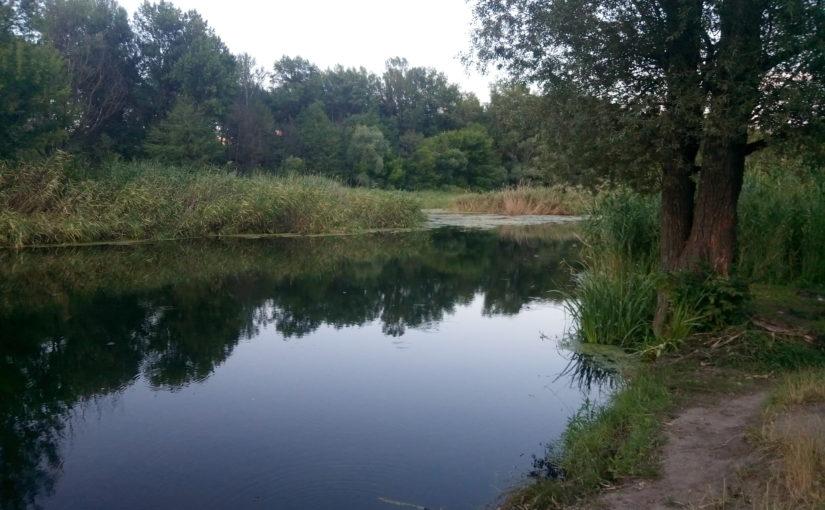 Летняя охота за голавлем на небольших речушках